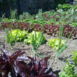 6 Time Saving Tips For Gardening