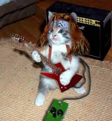 Rock and Roll Kitty